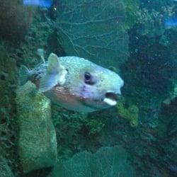 downtown aquarium order food online 1077 photos 641 reviews