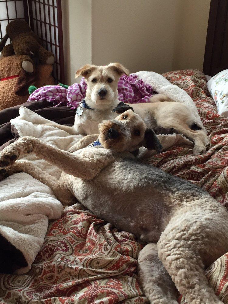 Rose's TLC Pet Care: San Jose, CA