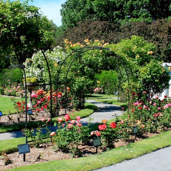 James P Kelleher Rose Garden - 49 Photos - Parks - 73 Park Dr ...