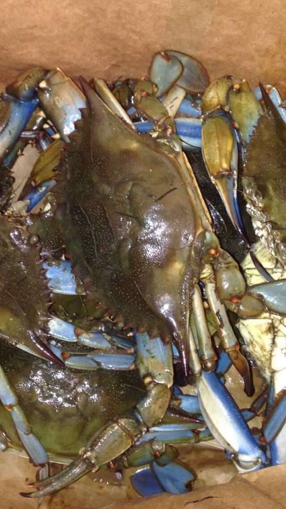 Live crabs today medium size yelp for Pops fish market