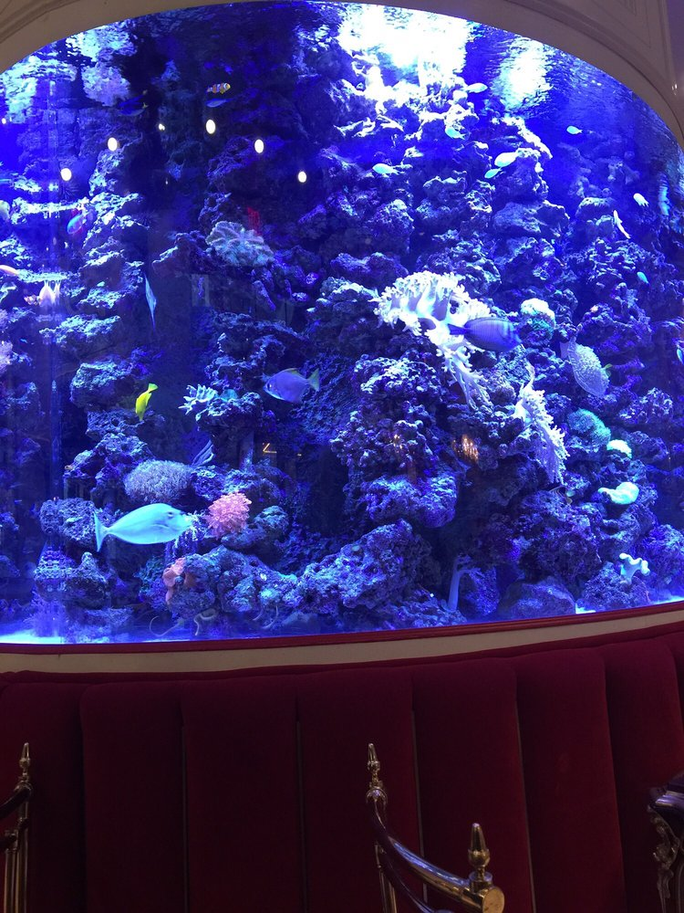 The fish tank at the kimberly hotel yelp for Fish tank cleaning service near me