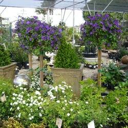 Photo Of H Nursery Lakewood Ca United States Flowers