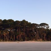 Image Result For Hunting Island State Park Nature Center St Helena Island Sc