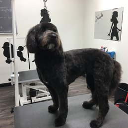 St Clair Shores Dog Grooming