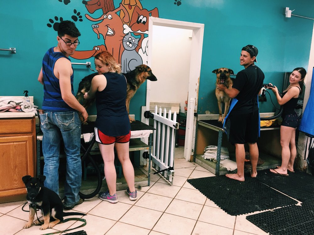 Dunk'N Dogs Dog Wash and Grooming