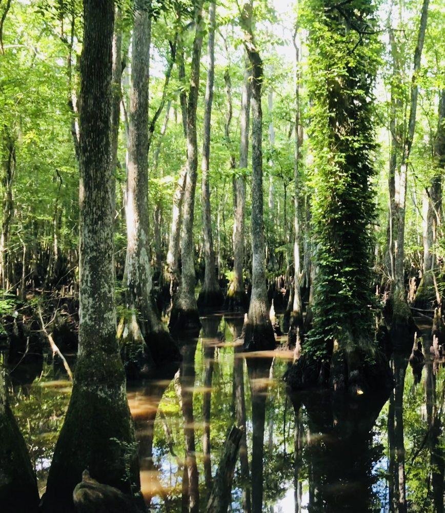 Francis Beidler Forest Audubon Center: 336 Sanctuary Rd, Harleyville, SC