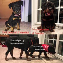 Top 10 Best Puppies For Sale In Pittsburgh Pa Last Updated March