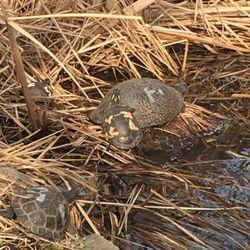 87e8f9d458a7 Wildlife Discovery Center - 61 Photos   16 Reviews - Aquariums ...