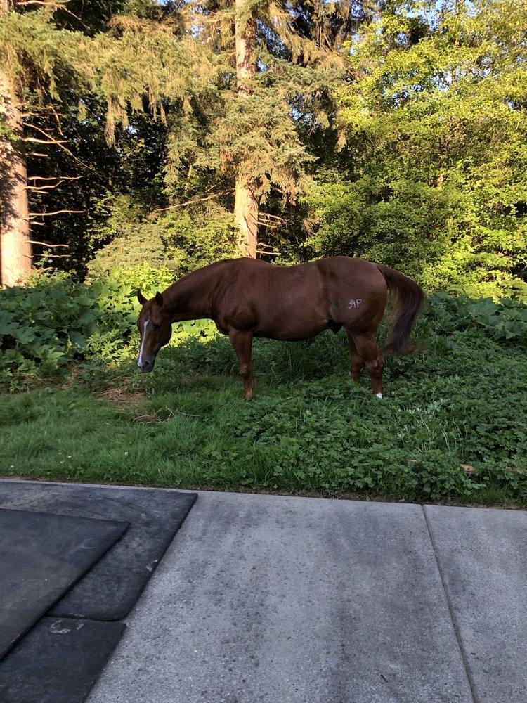 Bob Heirman Wildlife Preserve at Thomas' Eddy: 14913 Connelly Rd, Snohomish, WA