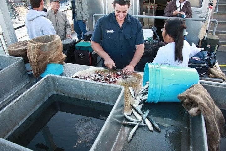 Chum chum chum yelp for Marina del rey fishing report