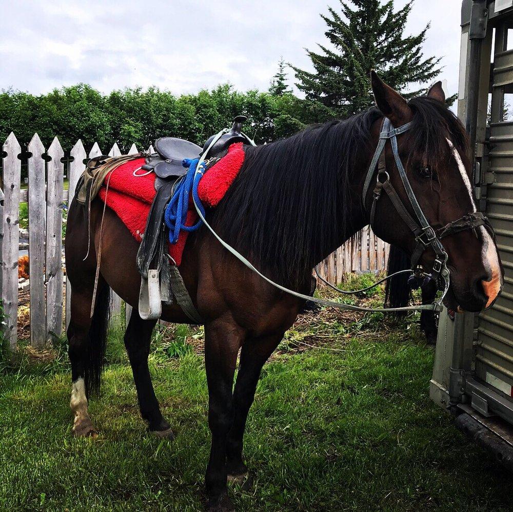 Trails End Horse Adventures: 53435 E End Rd, Homer, AK