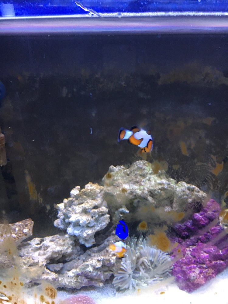 Tropical Island Aquarium: 2112 Deer Park Ave, Deer Park, NY