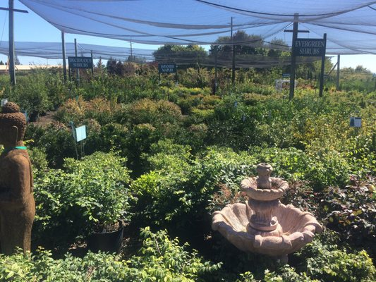 Loen Nursery Garden Center 18710 Sw Pacific Dr Sherwood Or