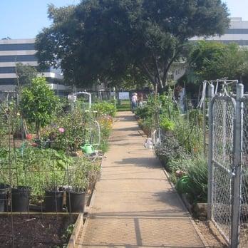 Photo Of Santa Monica Community Garden   Santa Monica, CA, United States.  Park