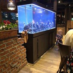 Hunan Springs Chinese Restaurant - (New) 101 Photos & 146