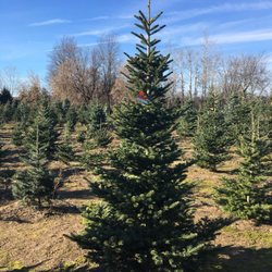 Photo of Candy Cane Christmas Tree Farm - Oxford, MI, United States ...