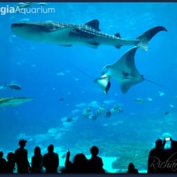 Photo Of Georgia Aquarium Atlanta Ga United States Huge Viewing Area For