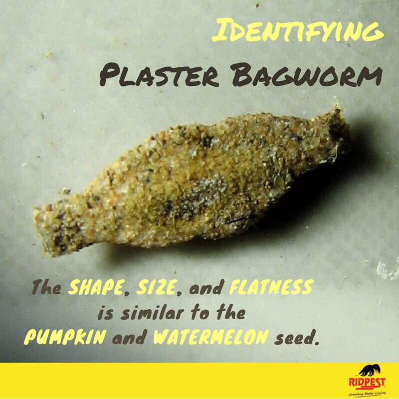 Getting rid of Paster Bagworms - Yelp