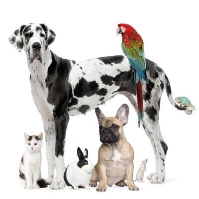 Barsch Animal Clinic - Veterinarians - 9999 Plantation ...