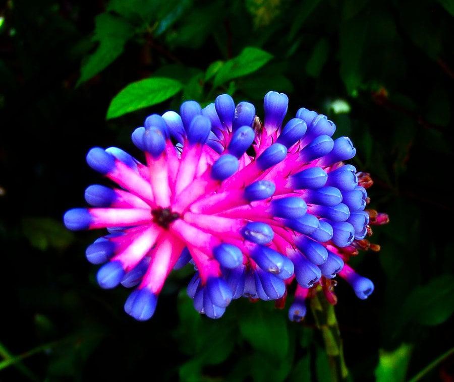 Christine's Tropical & Exotic Plants: 180 Race Track Rd N, Oldsmar, FL