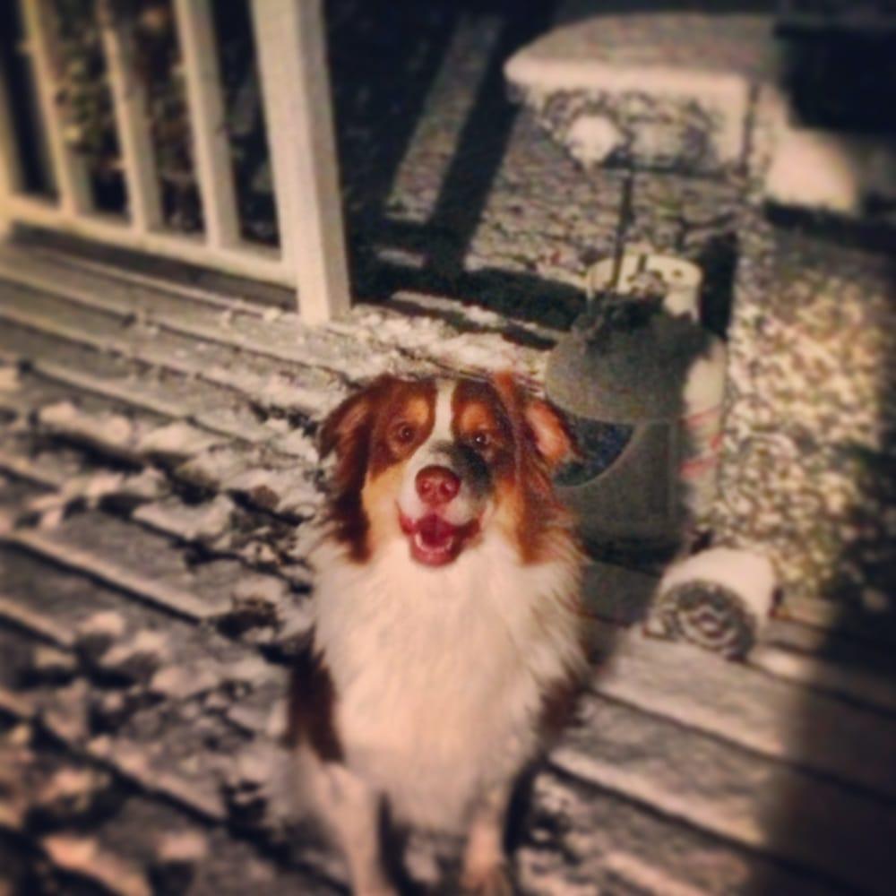 Lisa Bataska Dog Training