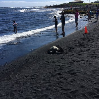 Photo Of Punalu U Black Sand Beach Island Hawaii Hi United