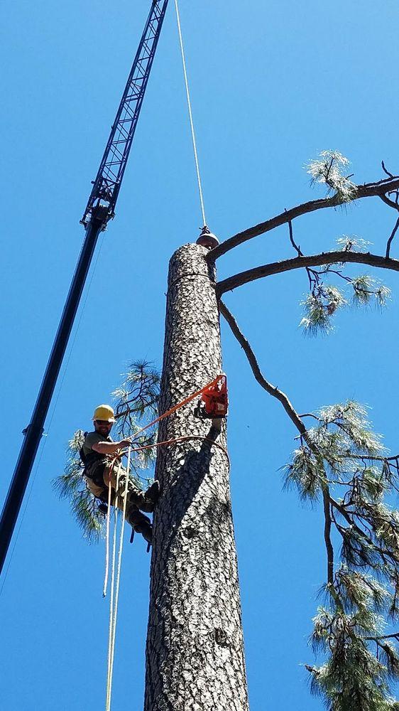 Timbersmith Tree Service: Auburn, CA