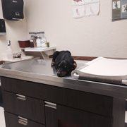 Golden state humane society 132 photos 376 reviews - Garden state veterinary services ...