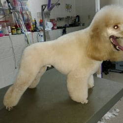 A perfect pet salon pet groomers latham ny reviews for A perfect pet salon