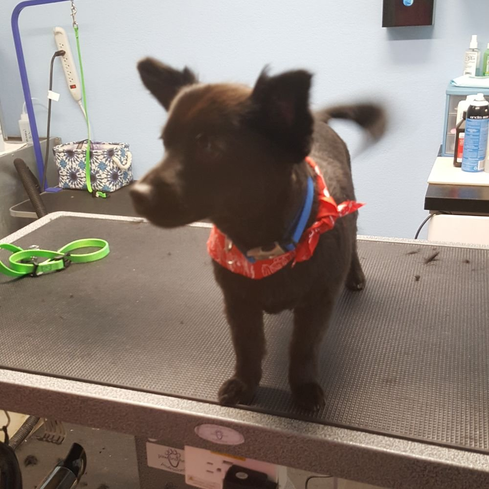 Acton Pet Grooming: 33309 Santiago Rd, Acton, CA