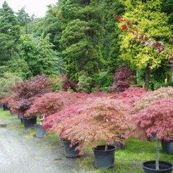 Photo Of Wells Nursery Mount Vernon Wa United States Lots Color