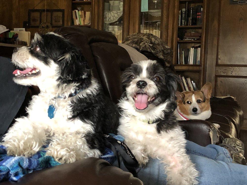 Gba Pet Service: 662 E Windham Ranch Rd, Goodrich, TX