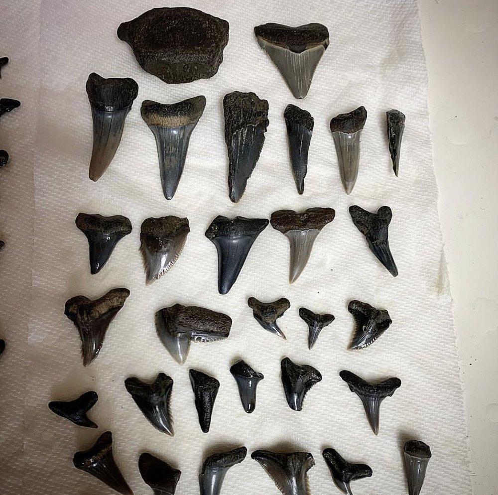 Aurora Fossil Museum: 400 Main St, Aurora, NC