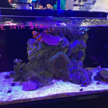 Southern aquatics local fish store 49 photos 25 for Local fish store