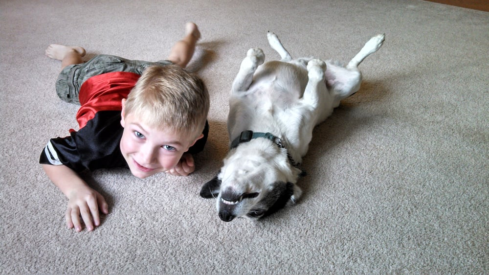 Let Them Sniff Pet Sitting: 2616 Quebec School Rd, Middletown, MD