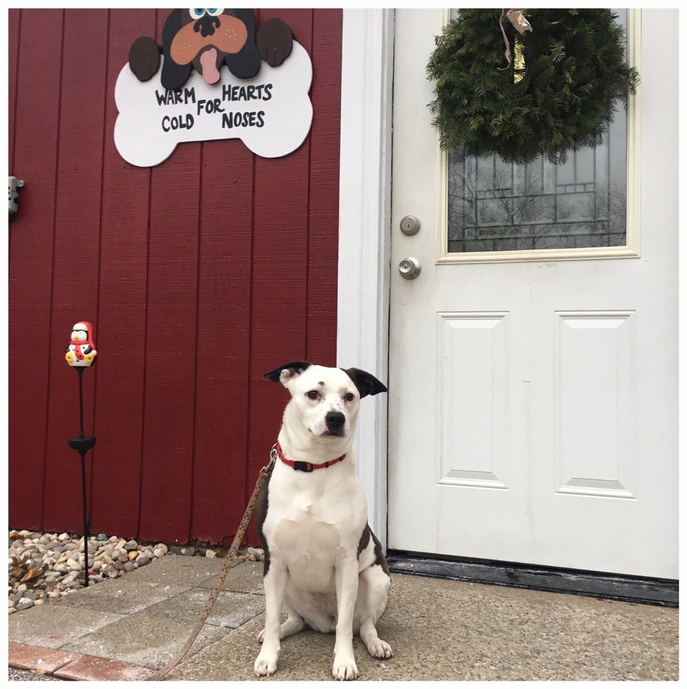 Pampered Pets: 522 Oak St, Ferrysburg, MI
