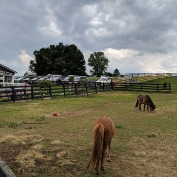 White Oak Lavender Farm - 137 Photos & 58 Reviews - Nurseries