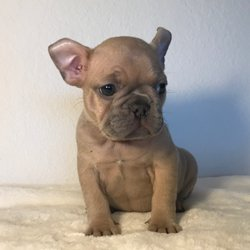 Frenchie-World - CLOSED - 40 Photos & 10 Reviews - Pet