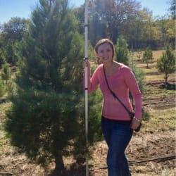 Pipe Creek Christmas Tree Farm - Christmas Trees - 805 ...