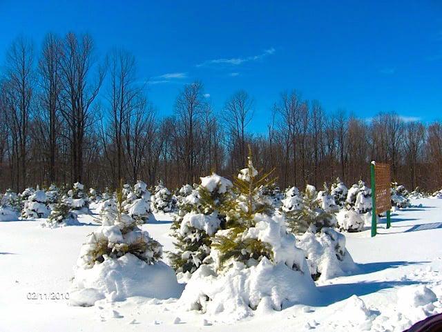 Photo of Mt. Bethel Christmas Tree Farm: Port Murray, NJ