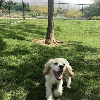 Dog Park San Marcos Ca