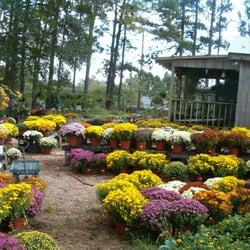 Photo Of Ins N Outs Nursery Saint Francisville La United States
