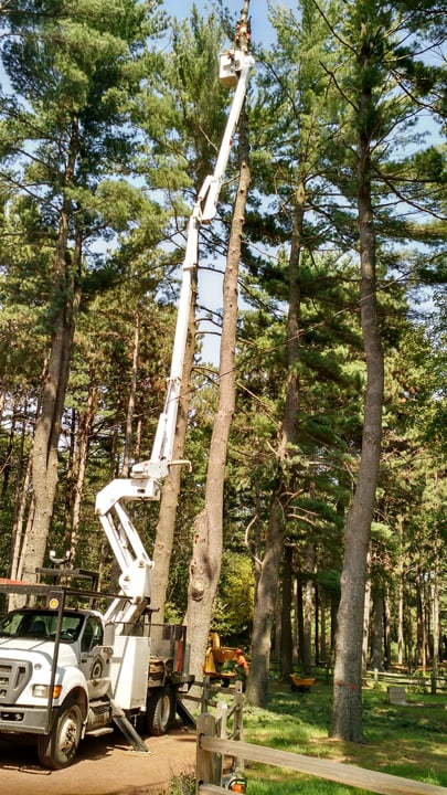 Mid State Tree Service and Arborist: E7468 Hwy 54, New London, WI
