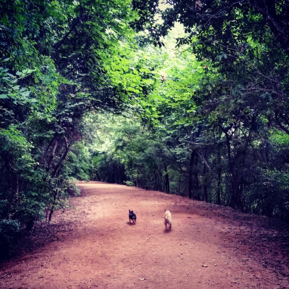 Red Bud Isle Dog Park | Free Fun in Austin