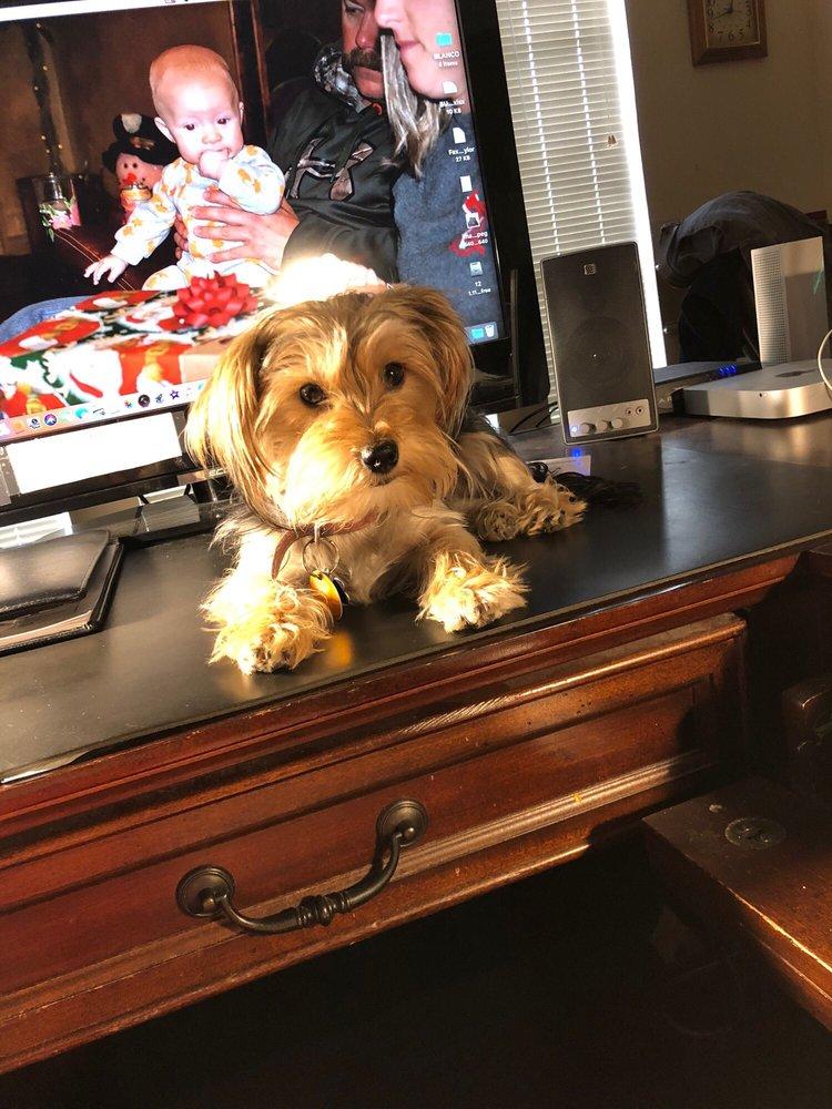 Azle Pet Salon: 342 Nw Pkwy, Azle, TX