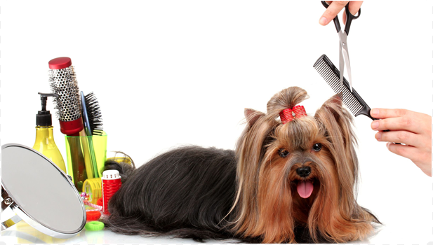 North Pine Pet Grooming: 17440 124th St SE, Becker, MN