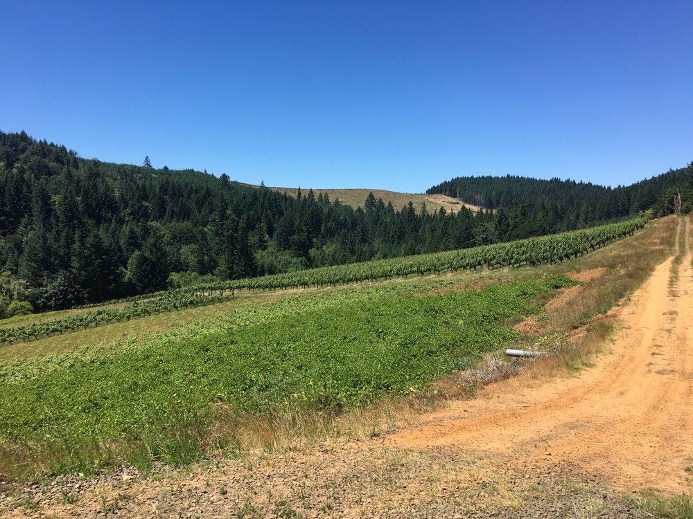 Brigadoon Wine Company: 25166 Ferguson Rd, Junction City, OR