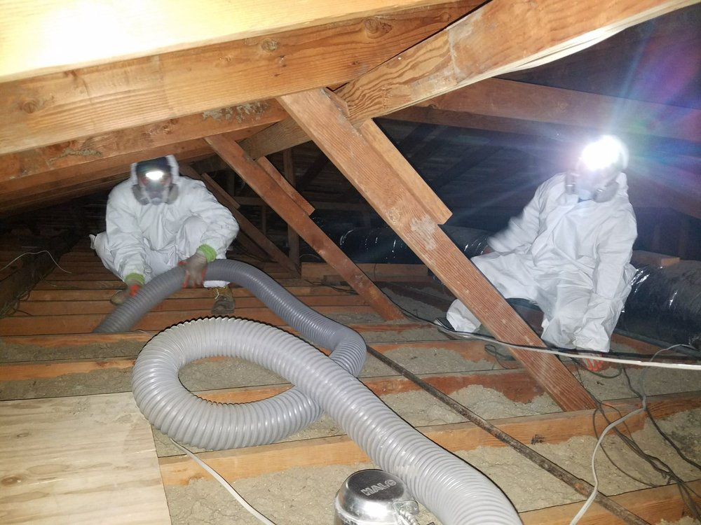 Mouse Proof Insulation : Attic solutions rodent proofing insulation services