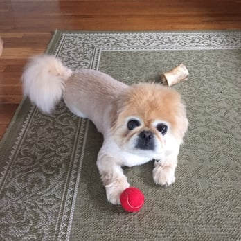Yelp Dog Grooming Boston