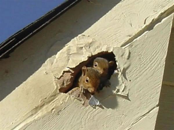 Squirrel Damage Yelp
